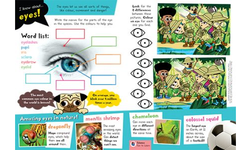 Learn All About Eyes